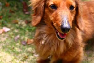 家を売却し愛犬のために広い一戸建てに住み替え