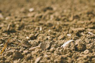 耕作放棄地